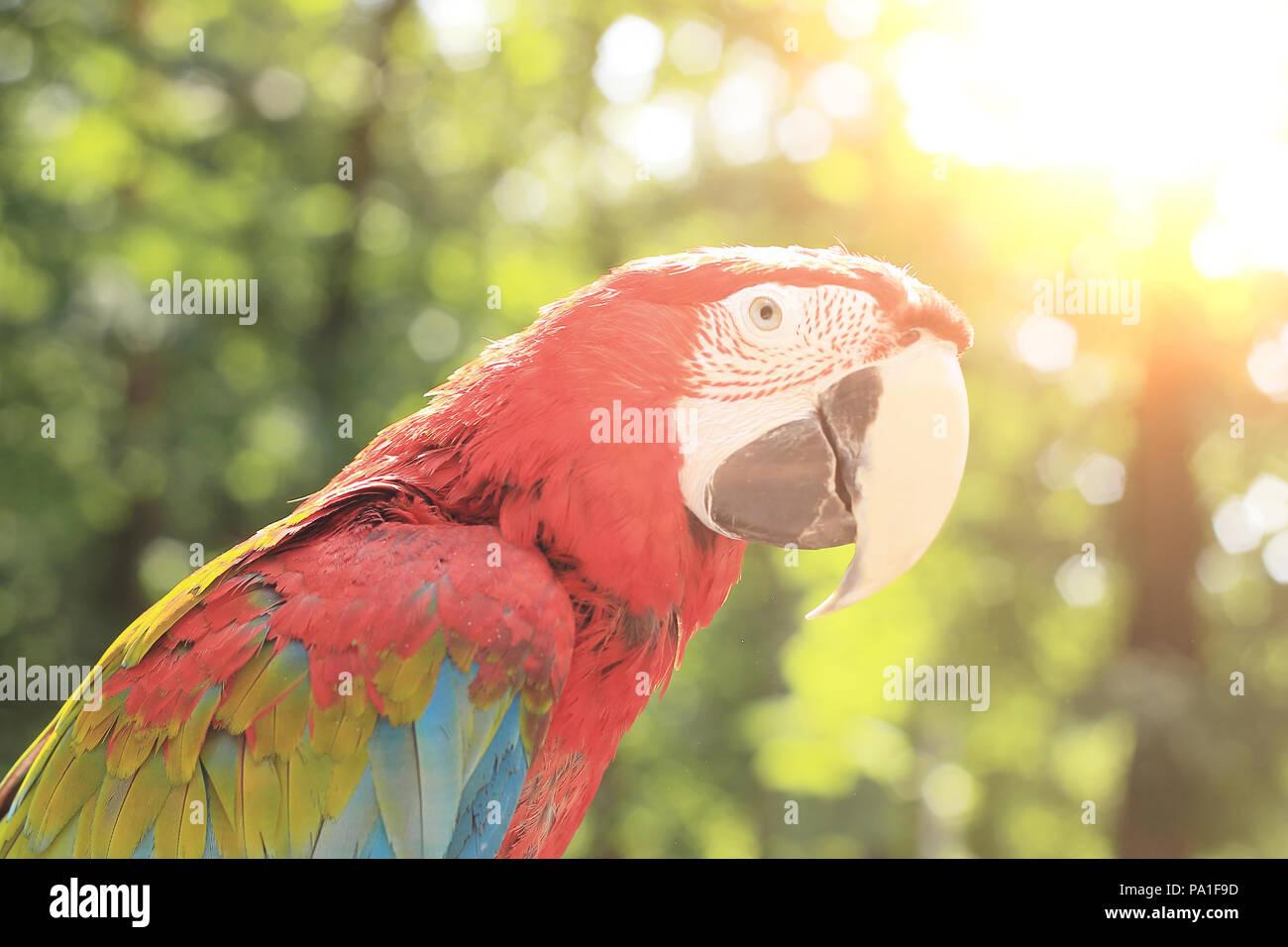 Bis zu schließen. ara Papagei auf unscharfen Hintergrund des Dschungels Stockbild
