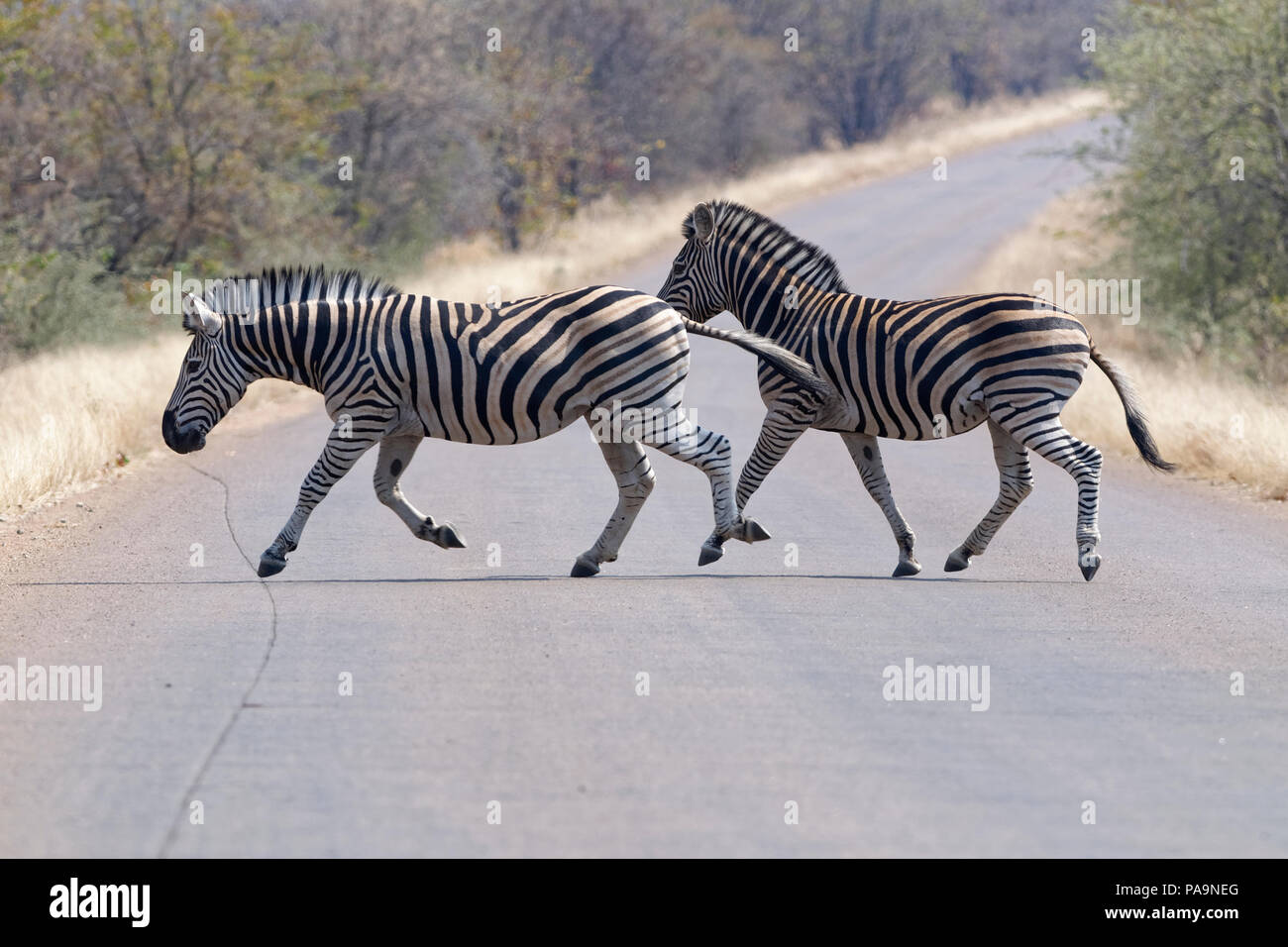 Two Tarred Stockfotos & Two Tarred Bilder - Alamy