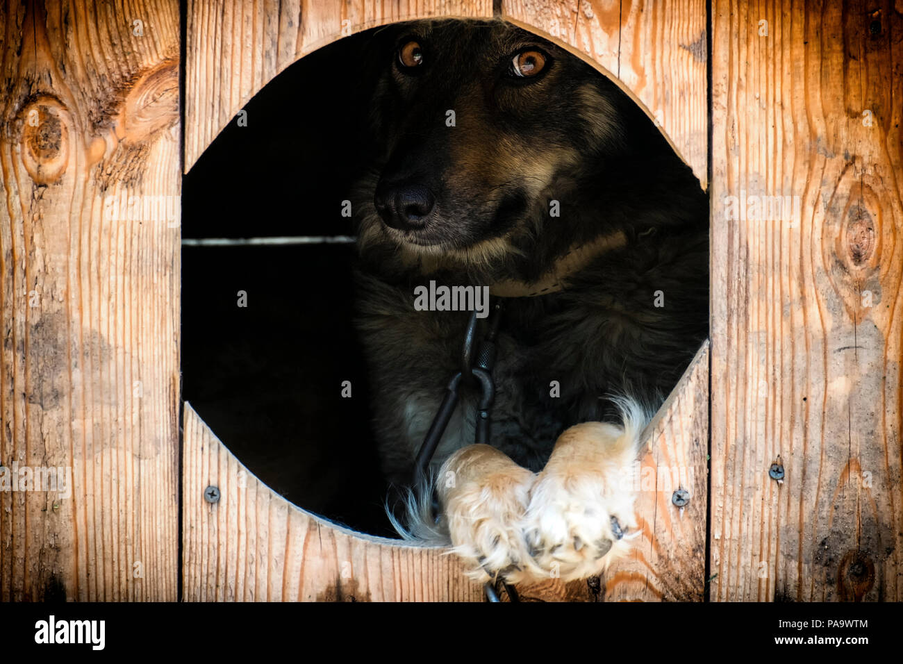 Kette Hund geheimnisvoll Blicke aus dem Kennel Stockbild