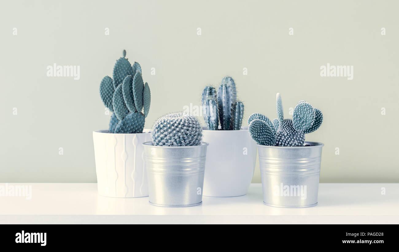 Cactus fashion set design. minimale noch leben. trendy minimalismus