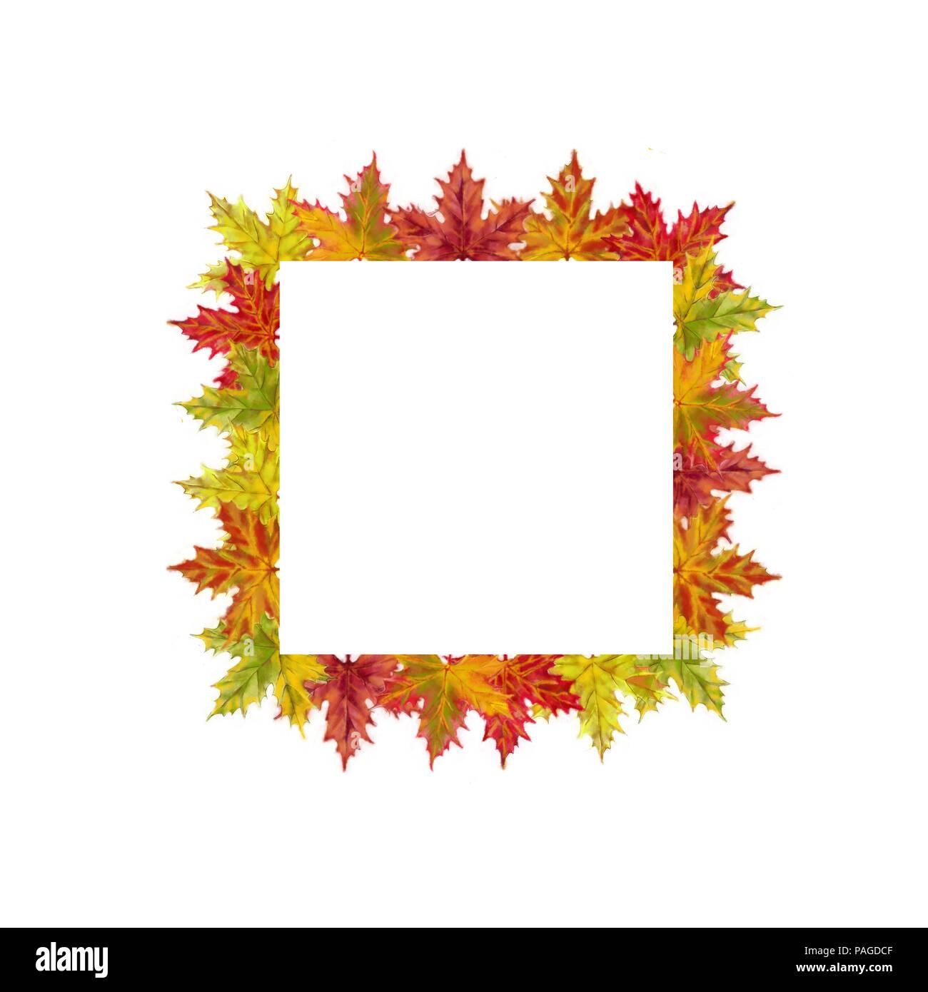 Herbst Ahorn Blätter Square Vorlage isoliert auf weißem Hintergrund ...