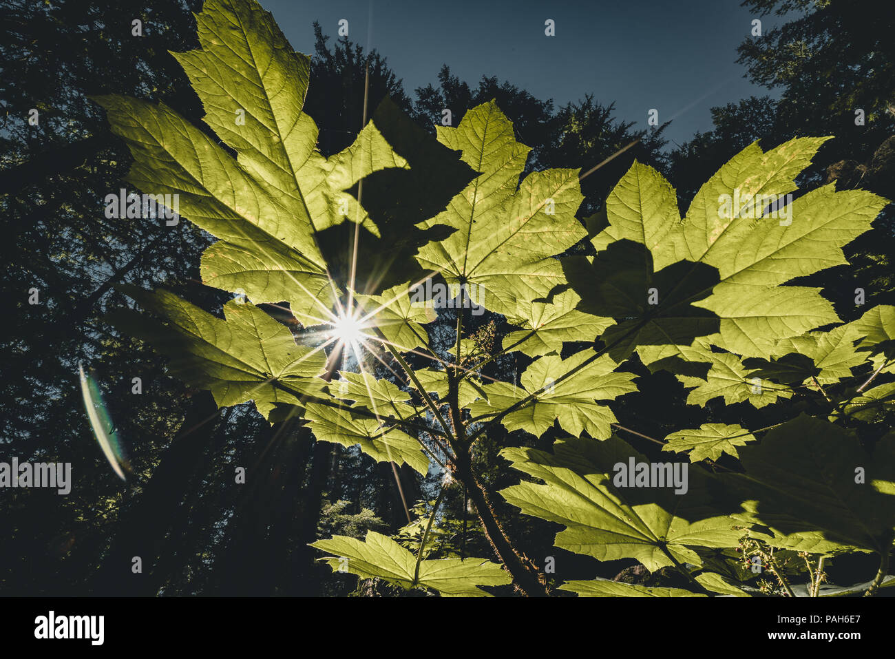 Sun Star durch Verlassen mit blauem Himmel Hintergrund leuchtend Stockbild