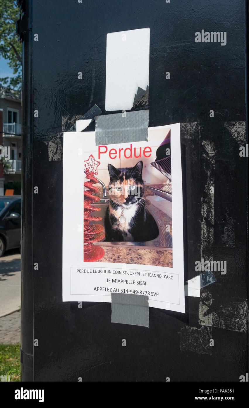 Bild posted in französischer Sprache für einen verlorenen bunte Katze in Montreal, QC, Kanada Stockbild