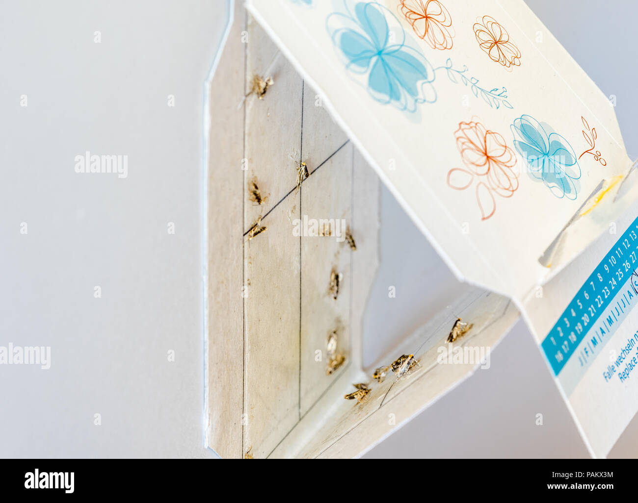 Gemeinsame Kleidung Moth Trap Mit Mehreren Toten Motten Im