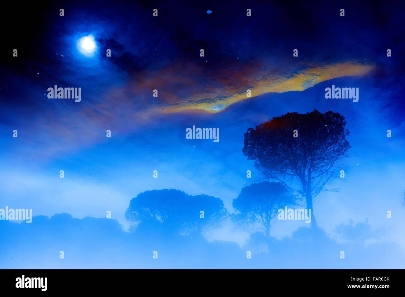 Spanien, Andalusien, Bäume und Himmel mit Wolken und Mond Stockbild