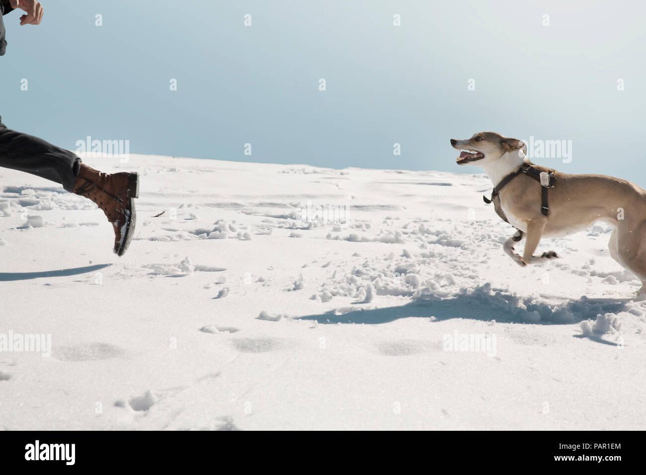 Mann spielt mit Hund im Winter, laufen im Schnee Stockbild