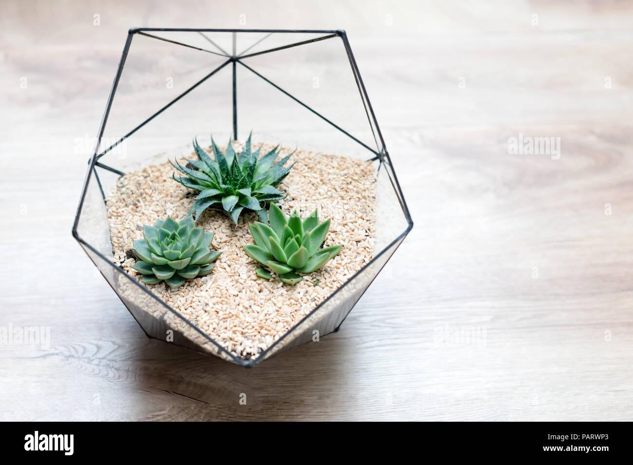 florarium glas vase mit sukkulenten pflanzen und kleinen kaktus auf holz hintergrund kleiner. Black Bedroom Furniture Sets. Home Design Ideas