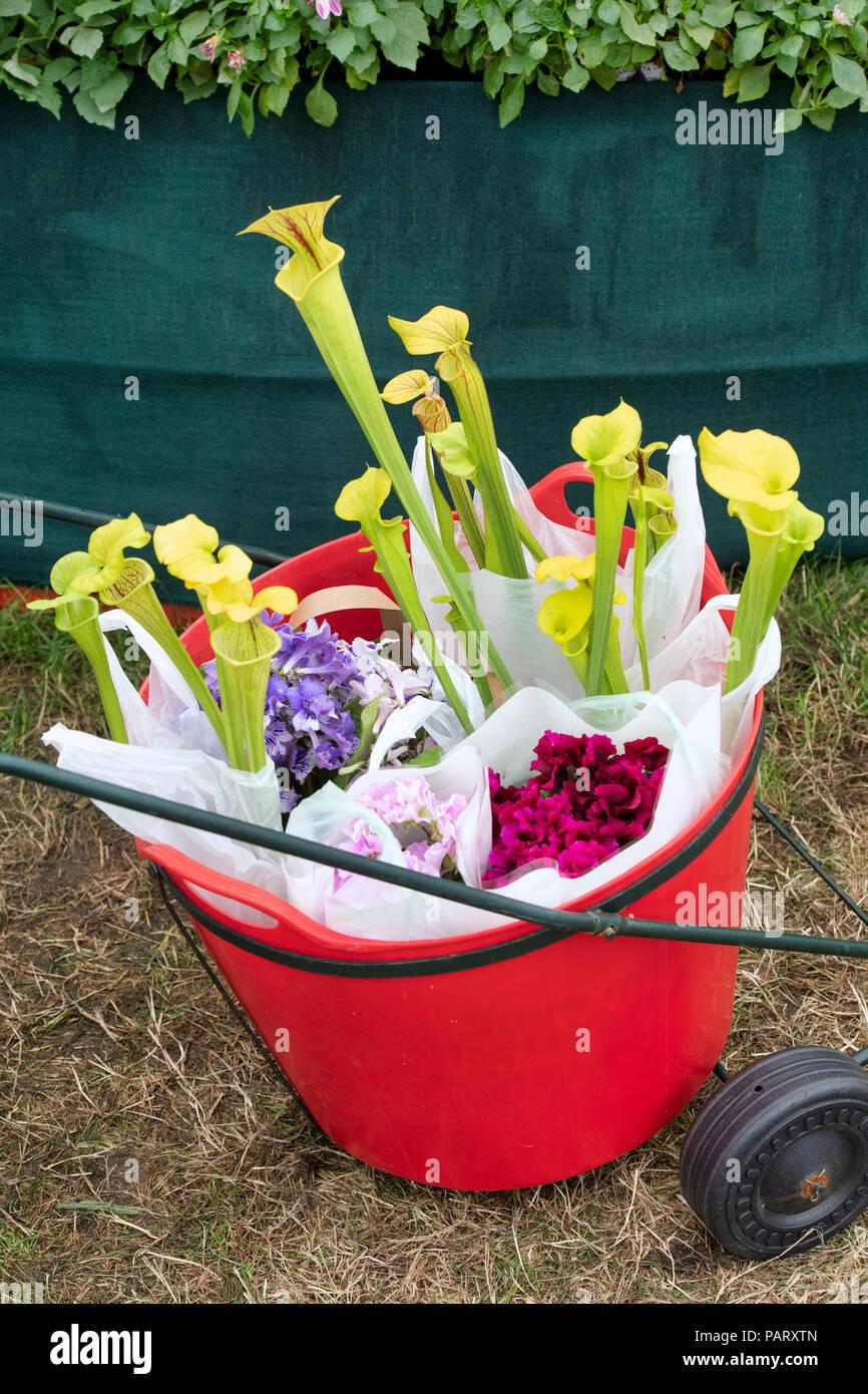 Flower Trolley Stockfotos & Flower Trolley Bilder - Alamy