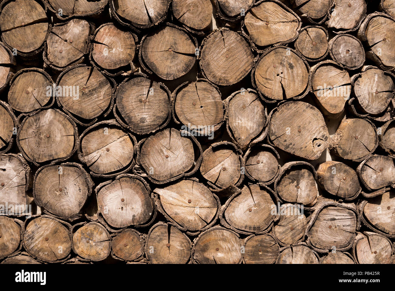 pine tree bark texture vector stockfotos & pine tree bark texture