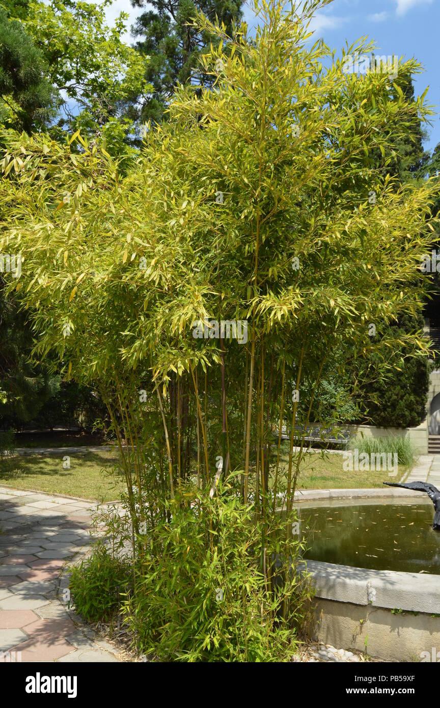 Teich Und Bambus Straucher In Einem Tropischen Park An Einem