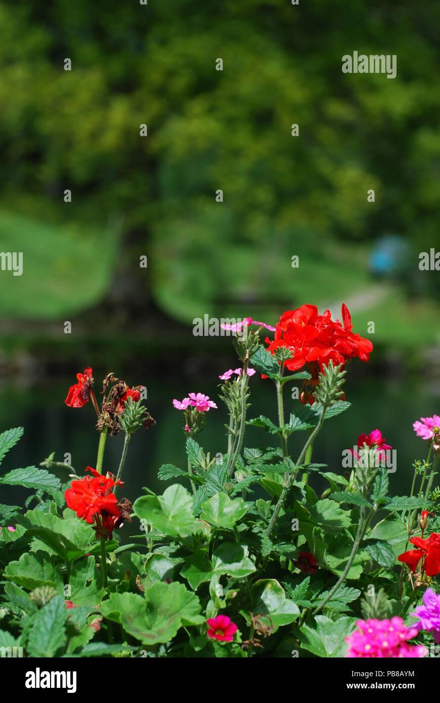 Schöne Blumen In Einem Garten In Lienz österreich Stockfoto Bild