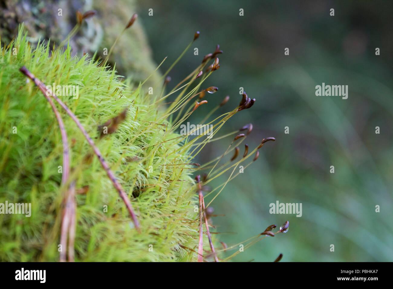 Top Moossporen Stockfotos & Moossporen Bilder - Alamy @JE_91