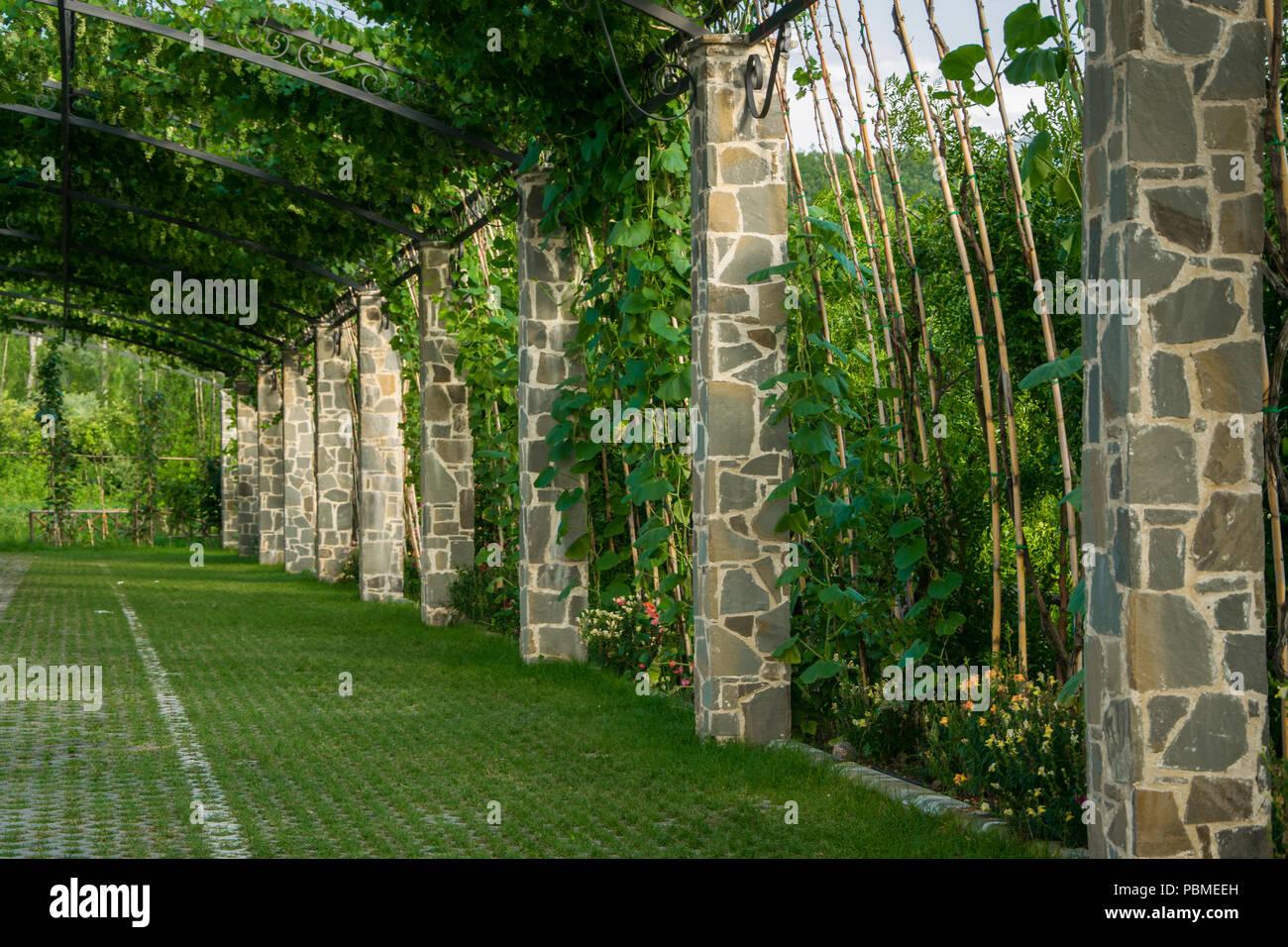 Pergola Garten Torbogen In Einem Gartenpark Mit Klettern Trauben