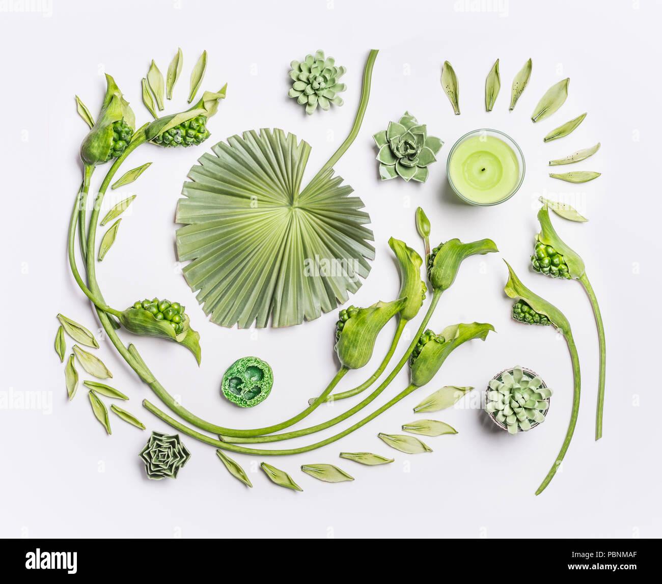 Spa wellness blumen  Botanische flach mit tropischen Blättern, Sukkulenten, grün Blumen ...
