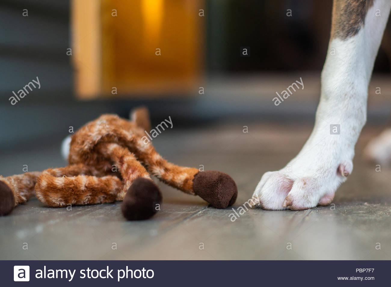 Weiße und graue Hund Pfote nächste Spielzeug auf Holz Portal zu Giraffe Stockbild