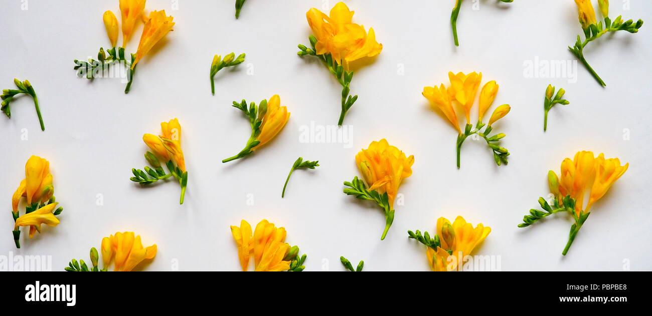 Blumen Komposition. Rahmen aus getrockneten gelben Blumen auf weißem Hintergrund. Flach, Ansicht von oben. Stockfoto