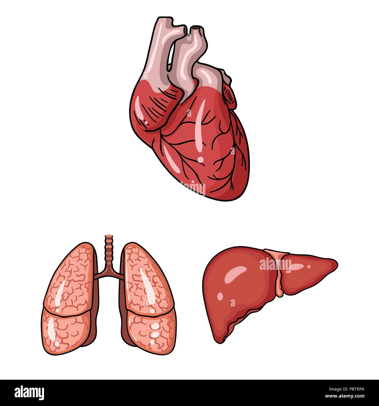 Internal Organs Icons Set Cartoon Stockfotos & Internal Organs Icons ...