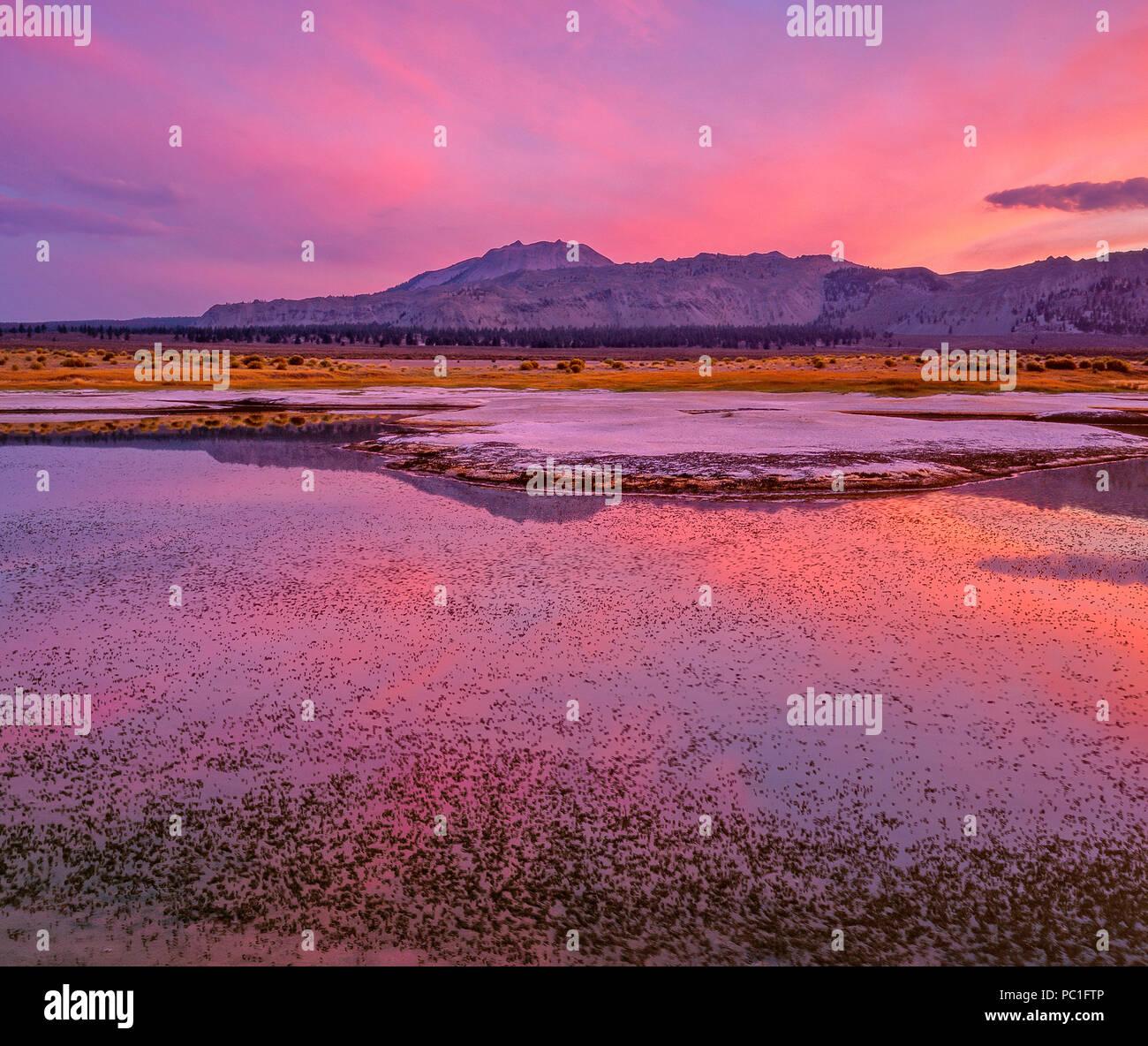 Dämmerung, Brineflies, Feuchtgebiete, Mono Lake, Mono Basin National Forest Scenic Area, Inyo National Forest, Kalifornien Stockbild