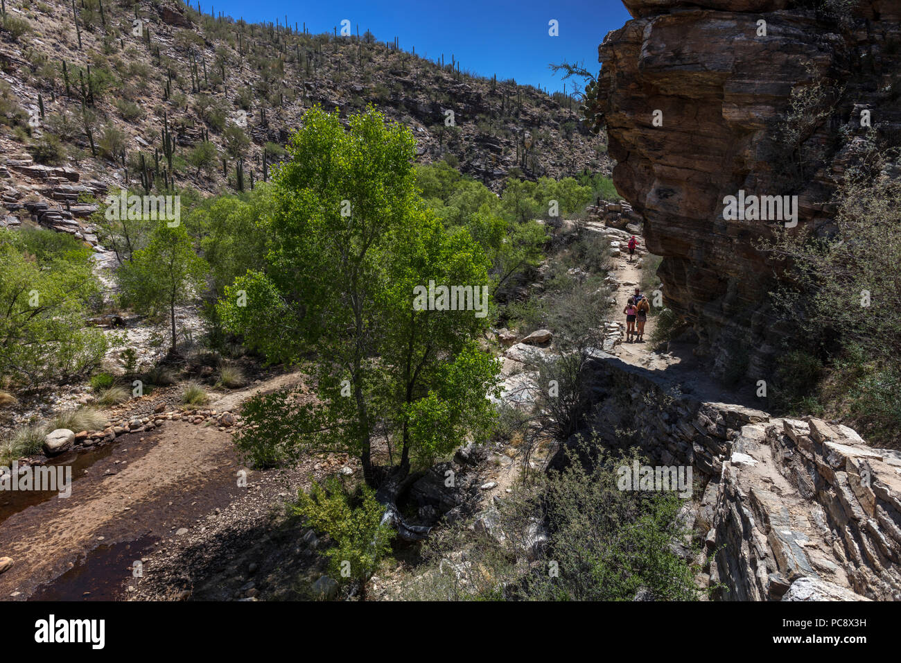 Niedrige Wasser bei Riparian Oase, Sabino Canyon, AZ Stockbild