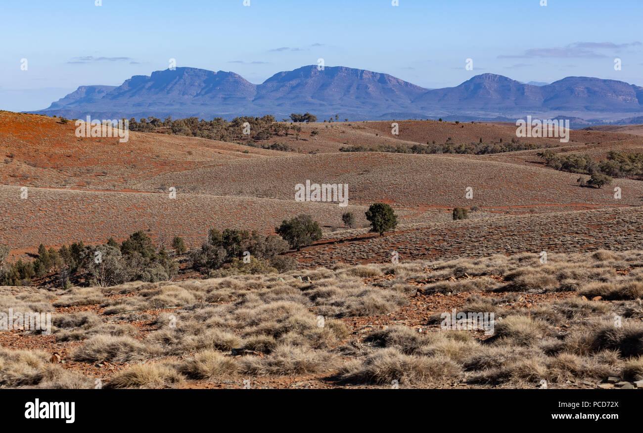 Spärliche Vegetation auf orange Rolling Hills in Flinders Ranges, South Australia Stockfoto