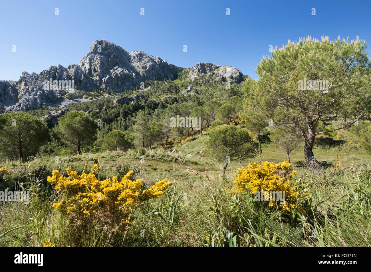 Zerklüftete Berglandschaft im Frühjahr in der Nähe von Grazalema, Naturpark Sierra de Grazalema, Andalusien, Spanien, Europa Stockbild