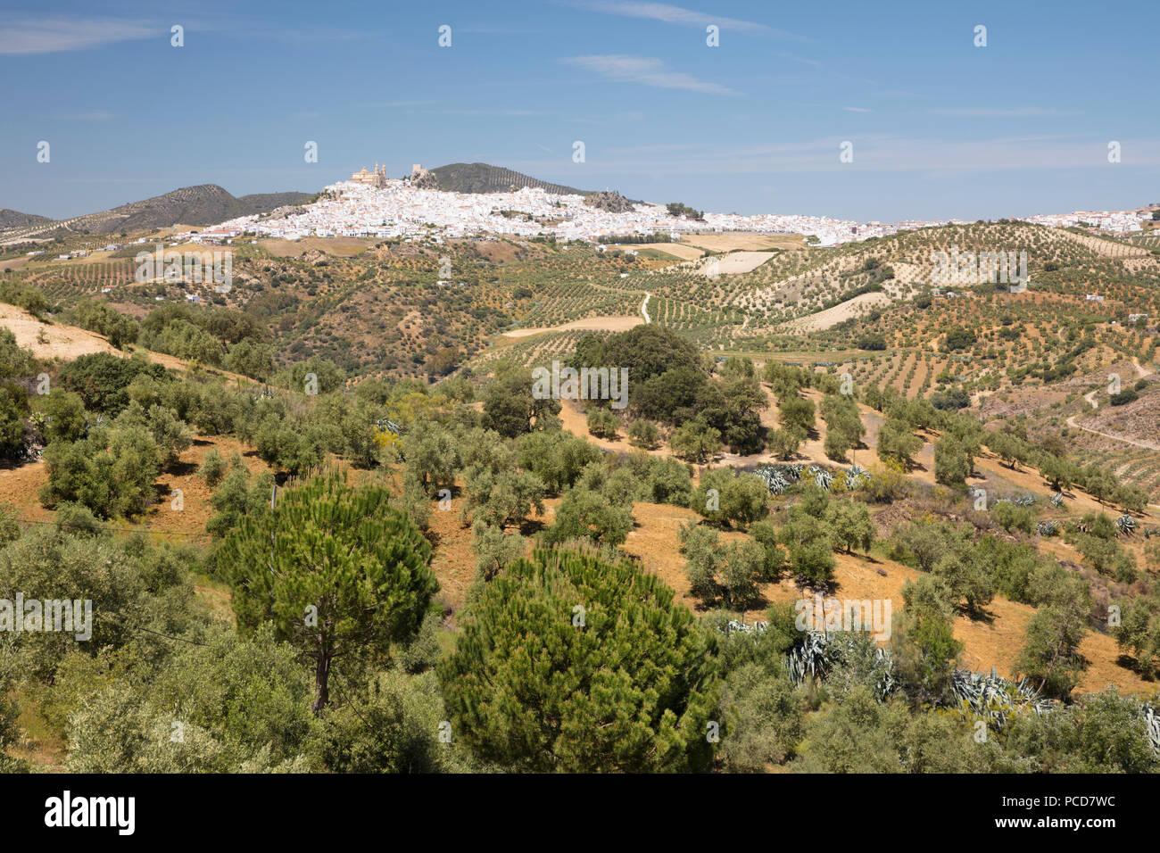 Typisch andalusischer Landschaft mit Olivenhainen und weiße Stadt Olvera, Provinz Cadiz, Andalusien, Spanien, Europa Stockbild