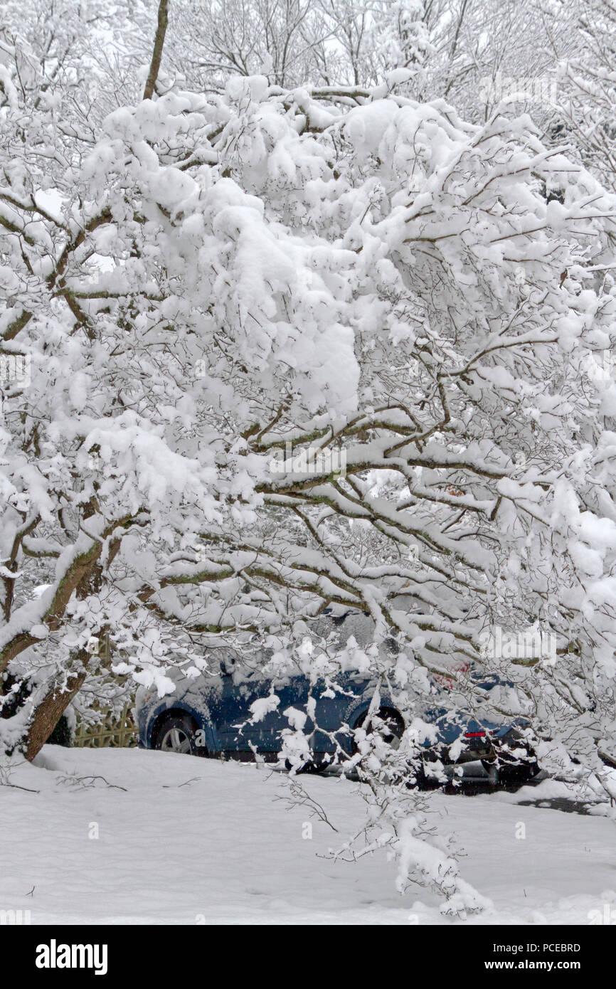 Zweige Schwer Beladen Mit Schnee Liegen Schwer Auf Ein Auto Dach