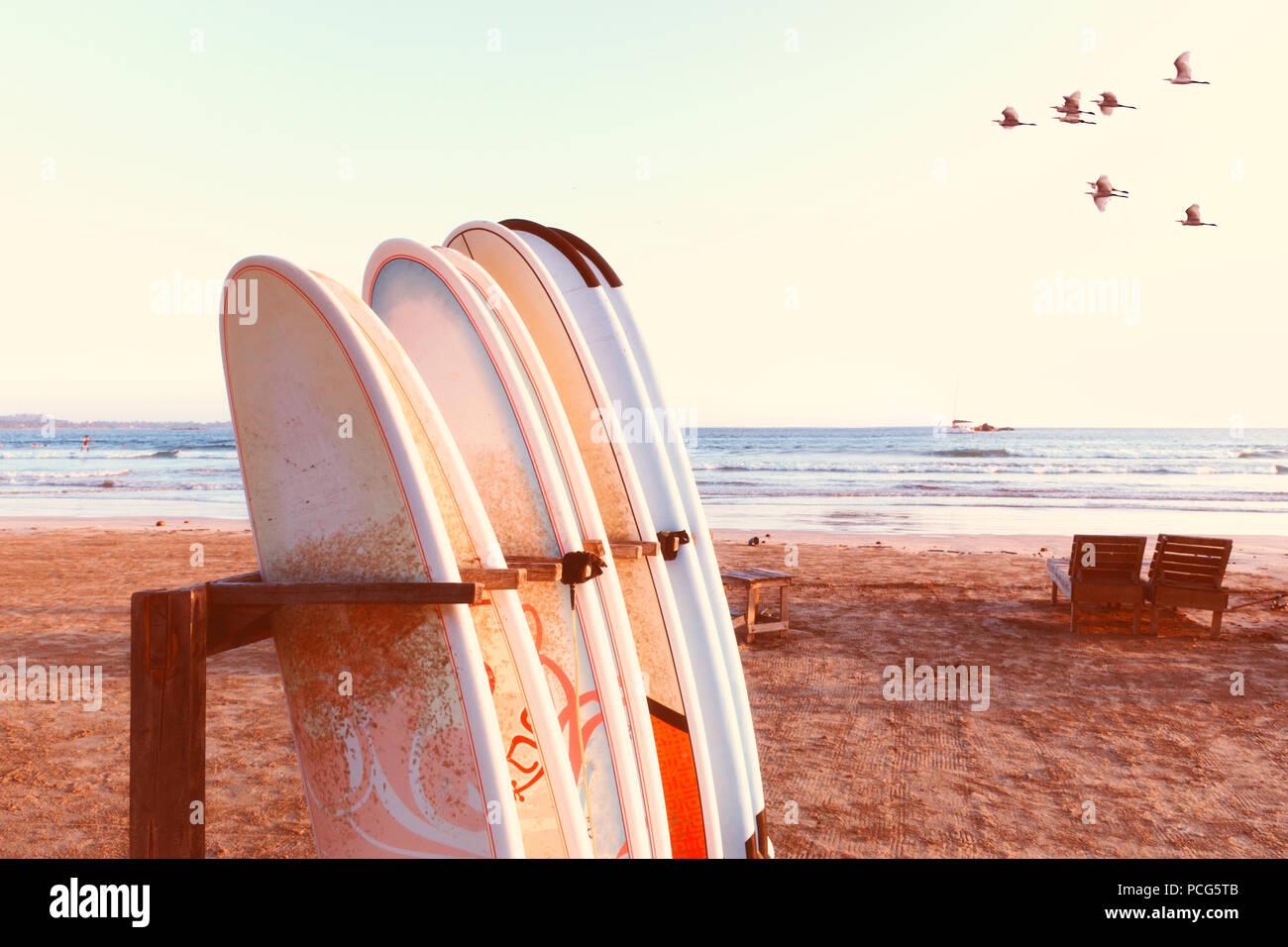 urlaub ferien hintergrundbild reihe von surfbrettern zwei liegest hle am strand konzept der. Black Bedroom Furniture Sets. Home Design Ideas