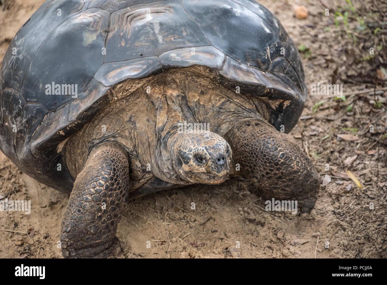 """Langsamer Bereich """"Schildkröte"""" bei St. Augustine Alligator Farm Tierpark in St. Augustine, Florida. (USA) Stockbild"""