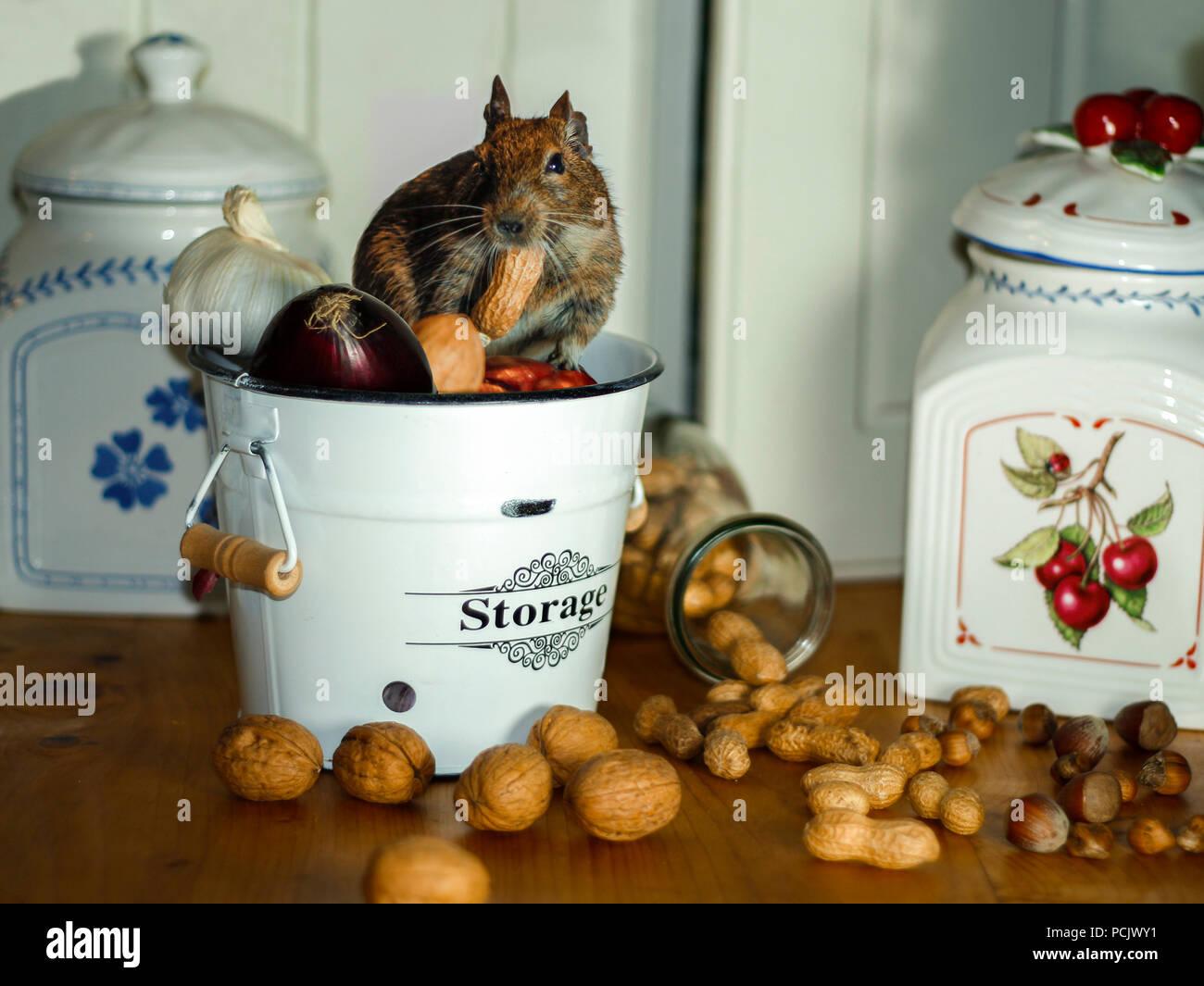 Lagerung Von Lebensmittelschadlingen Stockfotos Lagerung Von