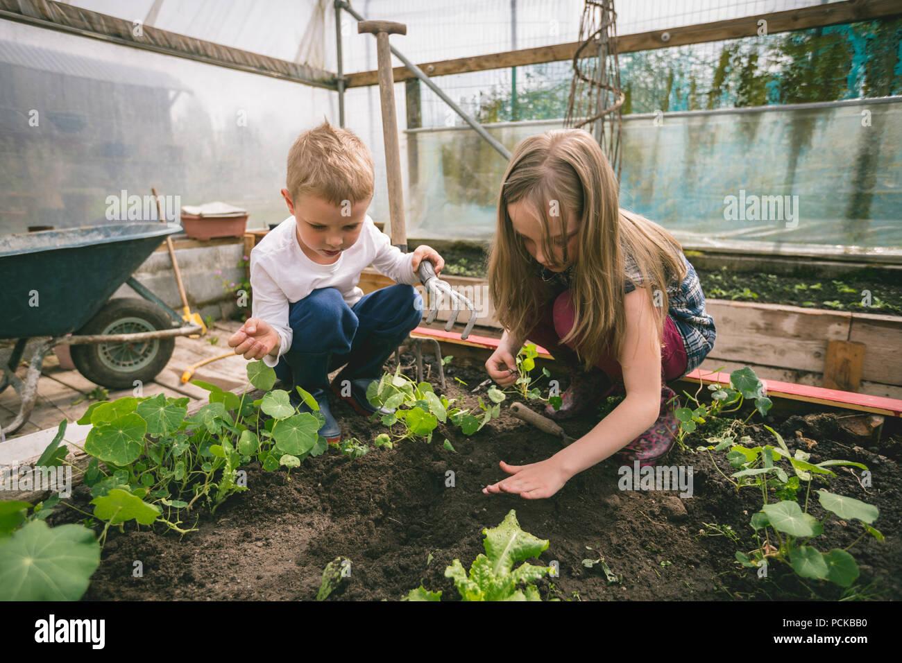 Kinder im Garten arbeiten im Gewächshaus Stockbild