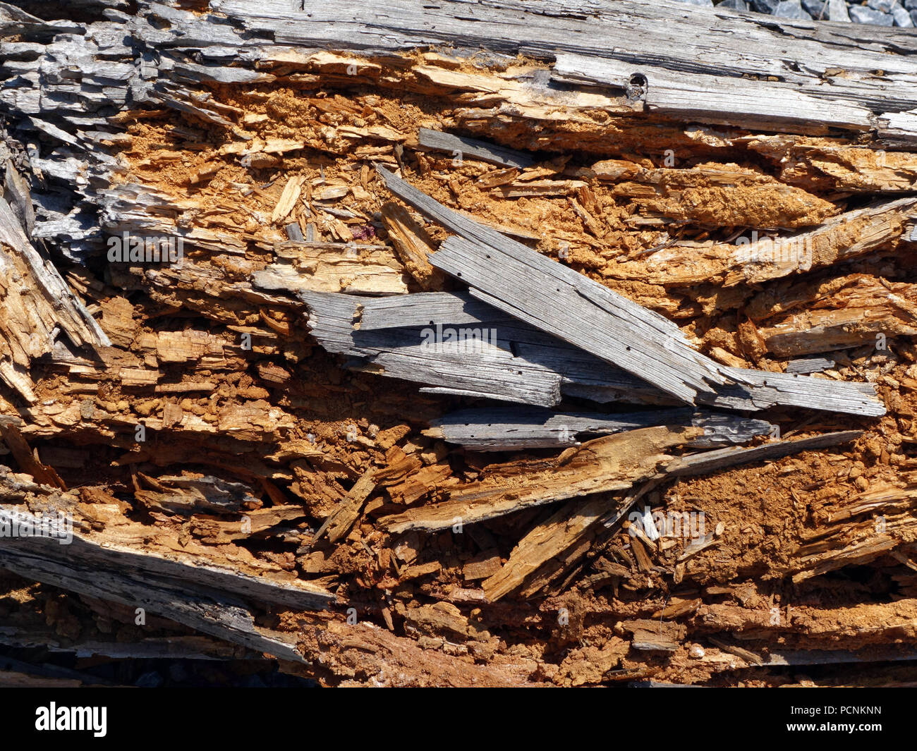 Holz balken