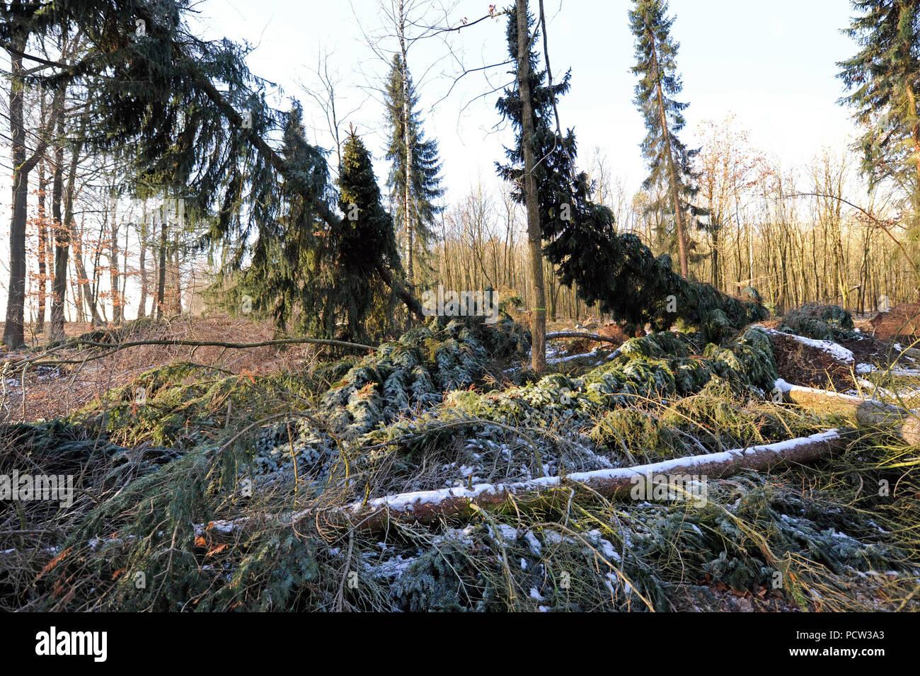 Sturm Friederike über Sachsen Am Ende Januar 2018 In