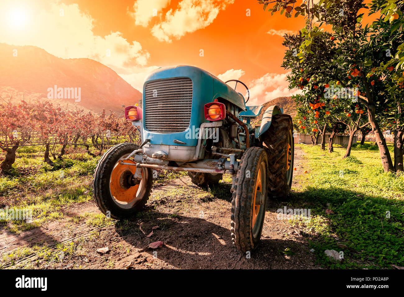 Bild in den Sonnenuntergang von einem alten Hellblau Traktor zur Bebauung der Felder. Unter Zitruspflanzen und Reben mit der Beleuchtung fotografiert auf Stockfoto