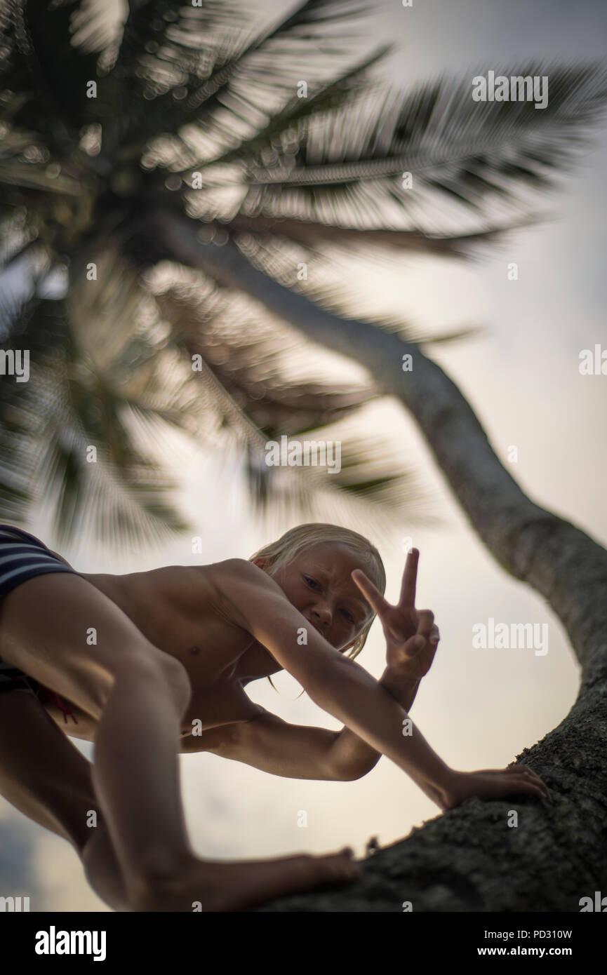 Junge klettern Palme, Gestik, die Frieden Schild in Richtung Kamera, Low Angle View, Mamanuca, Fidschi Stockbild
