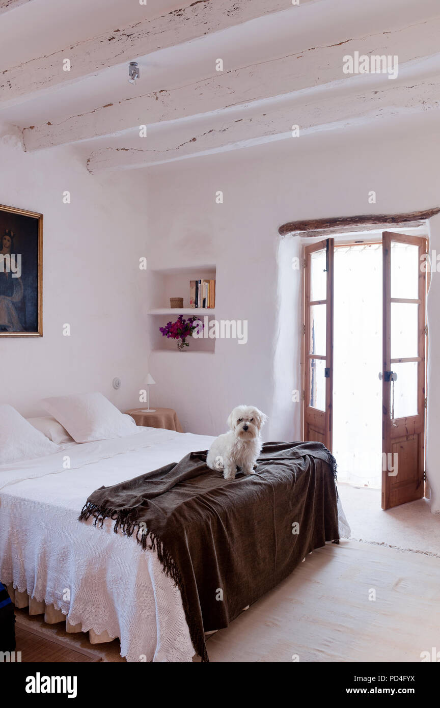 Hund auf dem Bett im Landhausstil Schlafzimmer Stockfoto ...