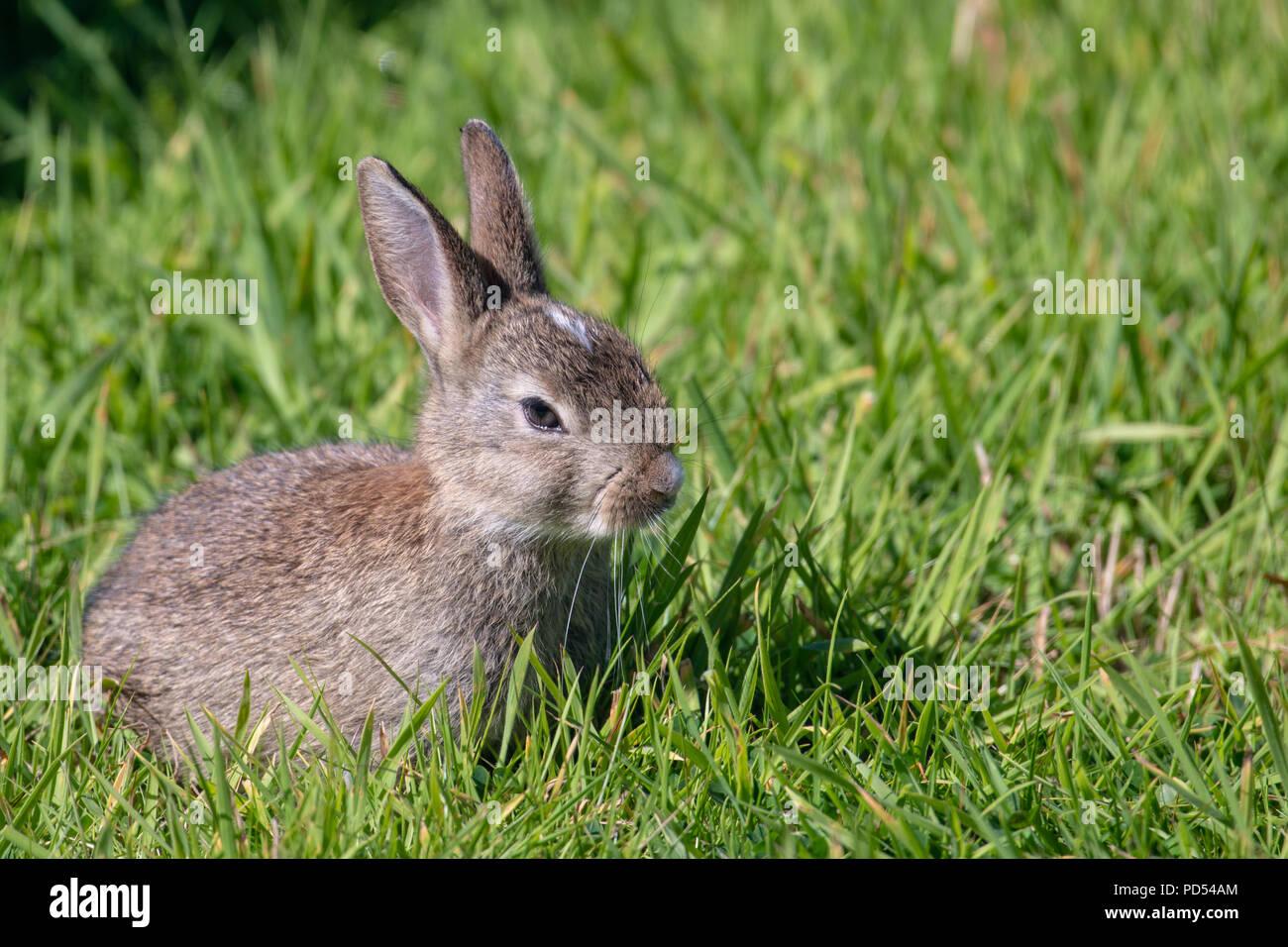 Einem Jungen Kaninchen Im Garten Stockfoto Bild 214628140 Alamy