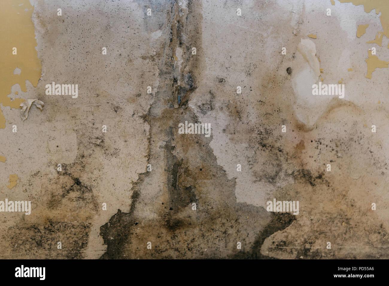 Die alte Wand im Badezimmer ist mit Schimmel im Zimmer zu feuchte