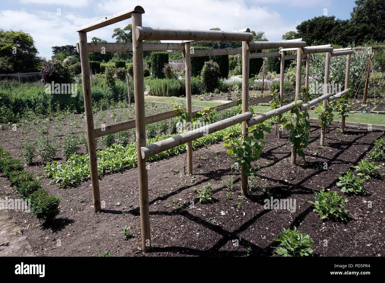 Weinreben Klettergerüst : Holz garten rahmen für den anbau von weinreben kent england