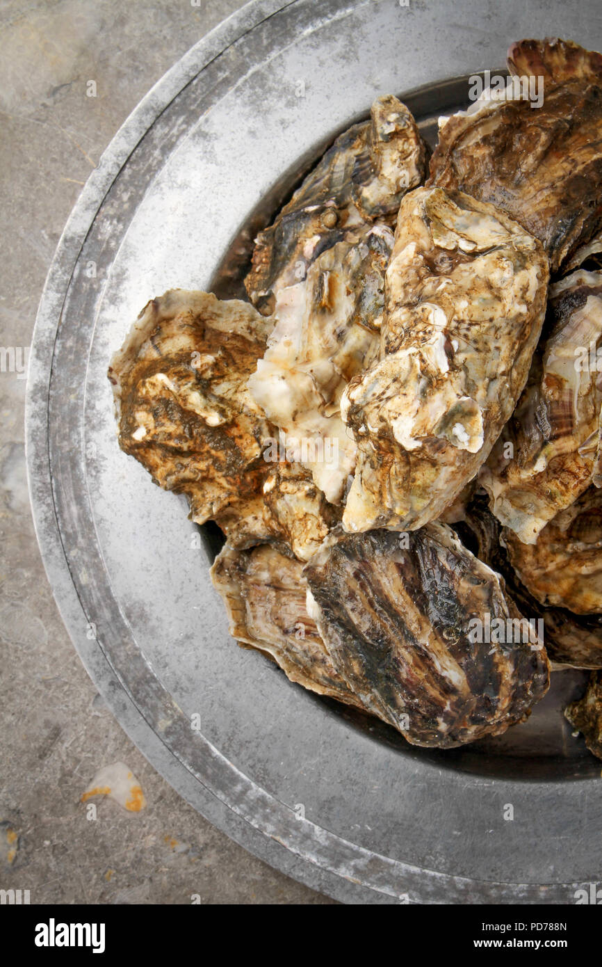 Frische Austern leben Stockbild