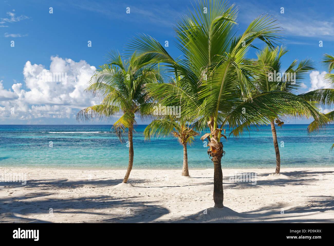 Beach Dream, Sandstrand mit Palmen und türkisblaues Meer, Parque Nacional del Este, die Insel Saona, Karibik, Dominikanische Republik Stockbild