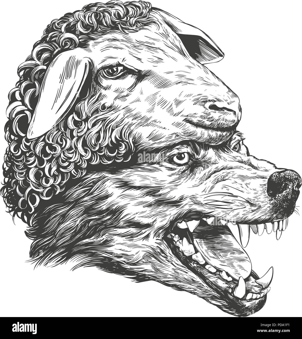 Wolf Sketch Stockfotos Wolf Sketch Bilder Alamy