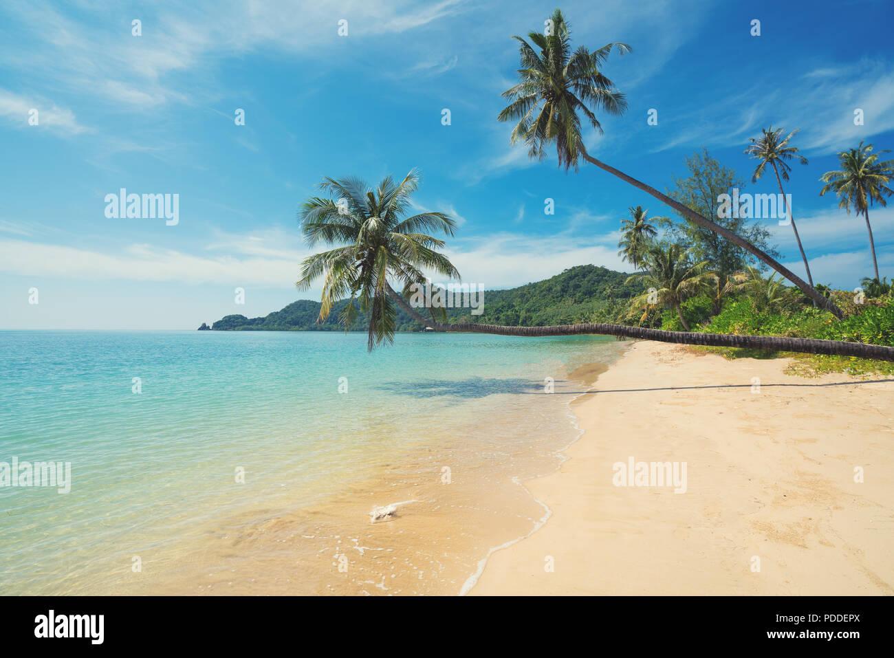 Coconut Palm Tree über Sommer Strand Meer in Phuket, Thailand. Sommer, Reisen, Ferien und Urlaub Konzept Stockbild