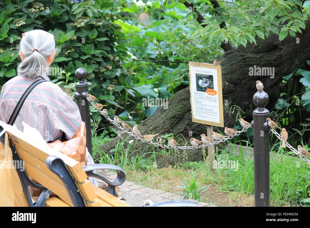 Einsamkeit, Altern & Vogelbeobachtung Stockbild