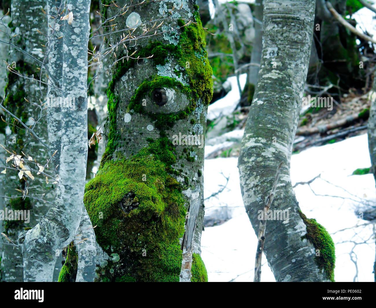 Auge form Baum ... wunderbare Natur! Stockbild