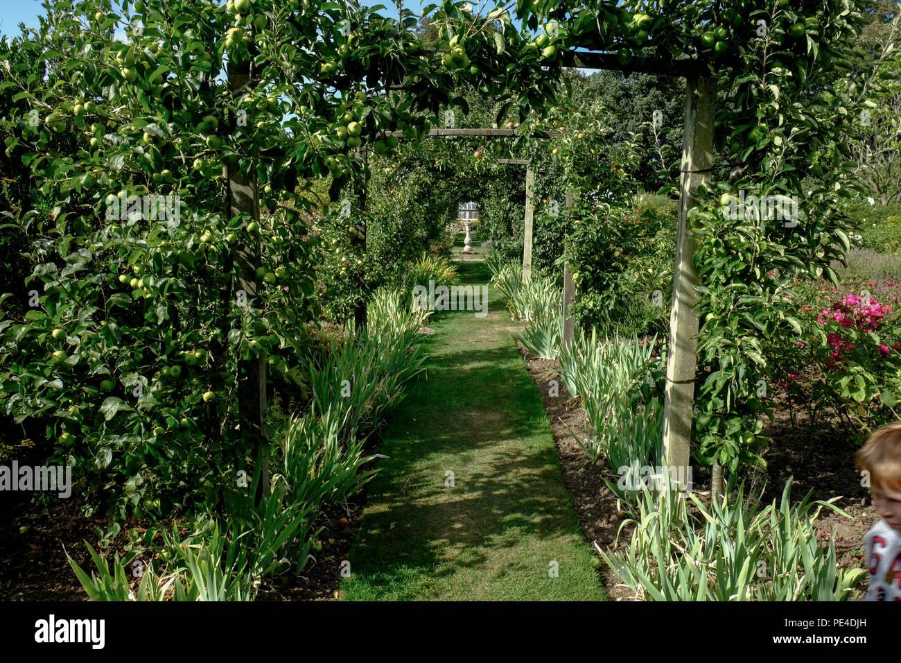 Tunnel Zu Fuß Von Obstbäumen Und Blumen In Einem Englischen Garten