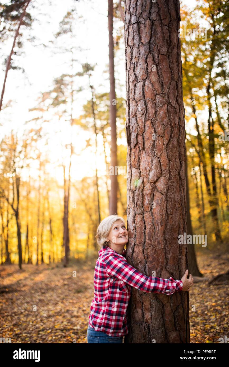 Ältere Frau auf einem Spaziergang im Wald. Stockbild