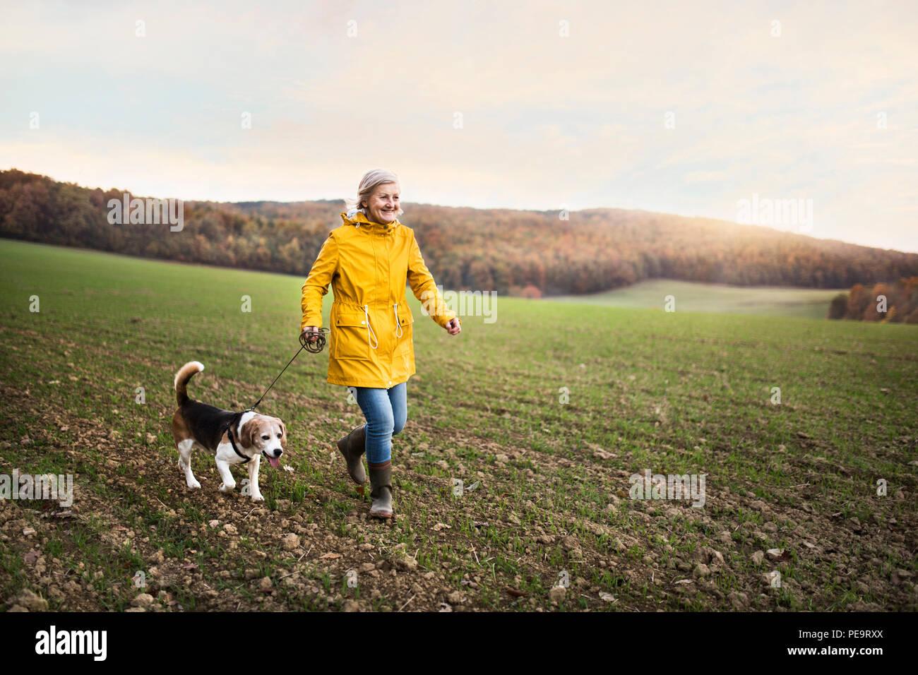 Ältere Frau mit Hund auf einem Spaziergang in einem Herbst Natur. Stockbild