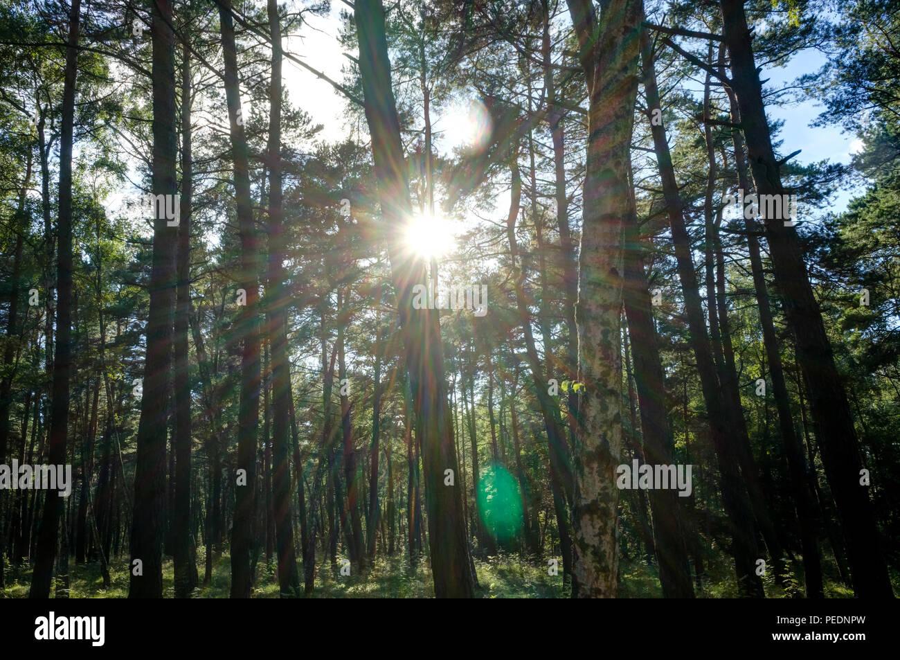 Grünen Wald Landschaft mit Sonne casting Schöne strahlen durch das Laub, moosigen Bauholz im Vordergrund. Foto in Litauen. Stockbild