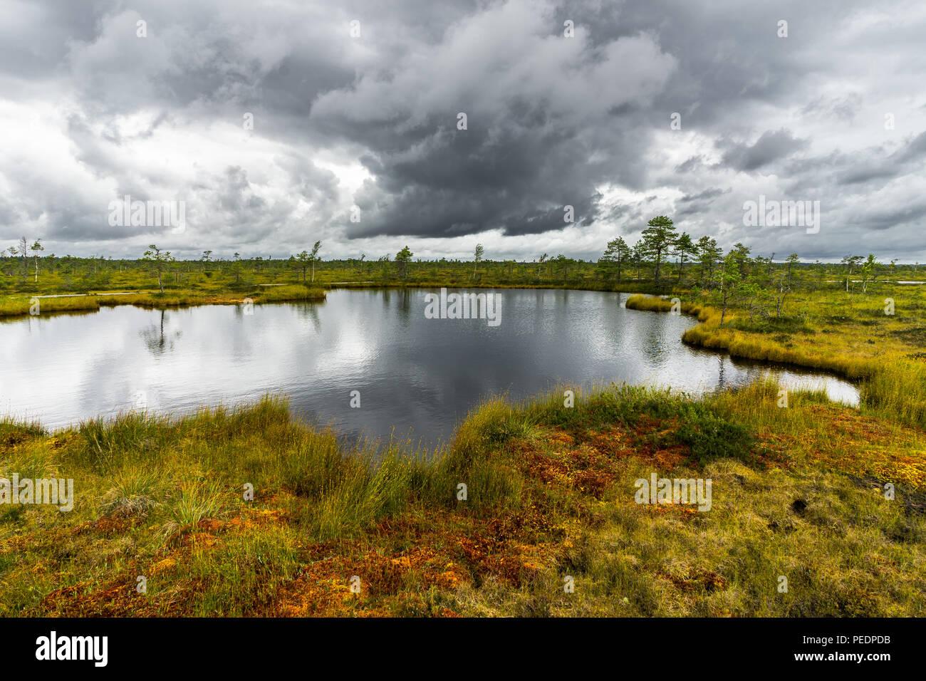 Misty Landschaft mit Viru Raba Moor im Moor. Lahemaa Nationalpark in Estland. Foto in Estland. Stockbild